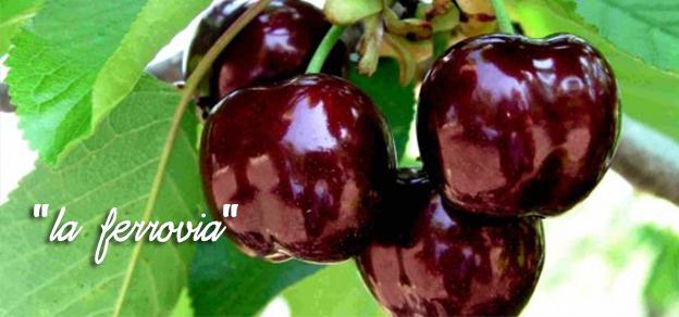 ciliegi, la-ferrovia, proprietà, vitamine ciliegia,